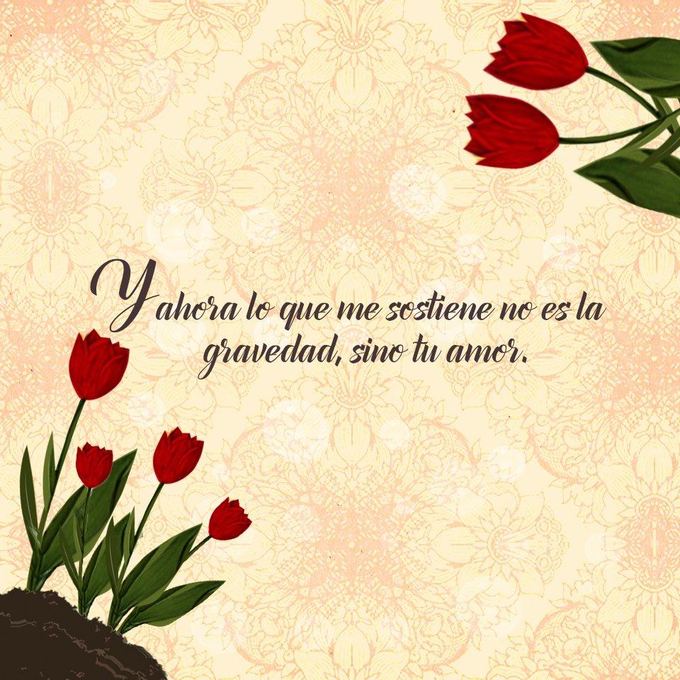 Imagenes De Rosas Con Frases Romanticas 3 Imagenes De Amor